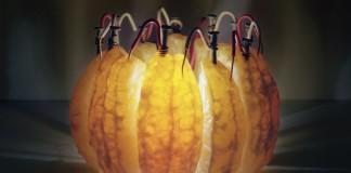 Mandarini Luminescenti, Luce dalla frutta