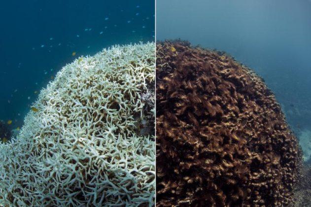 Morta la Grande Barriera Corallina