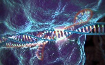 Ingegneria genetica e nuovi orizzonti