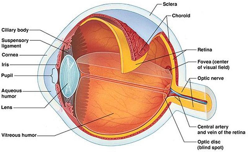 La cheratite neurotrofica: una patologia che porta a cecità