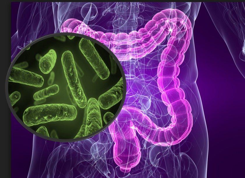 una correlazione tra batteri e malattie autoimmuni: alla ricerca di una cura efficace