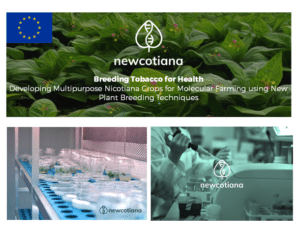 newcotiana studi pianta del tabacco