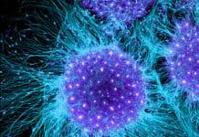 Cellule Staminali embrionali