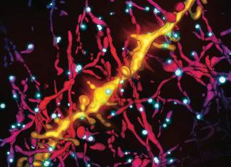 L'importanza della serotonina