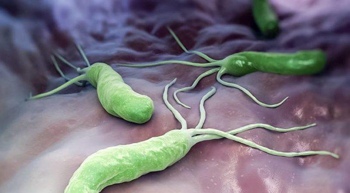 helicobacter pilory Unibo