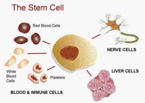 cellule staminali per la terapia contro gravi ferite