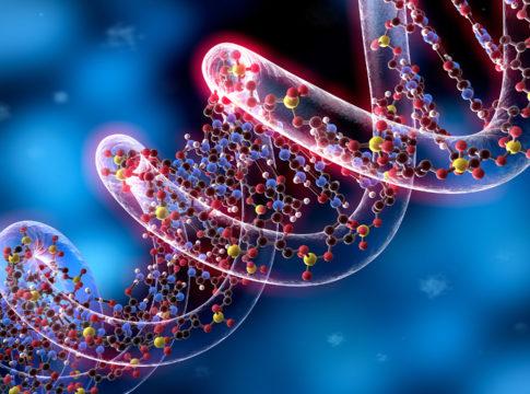 cellule staminali rigenerazione tessutale
