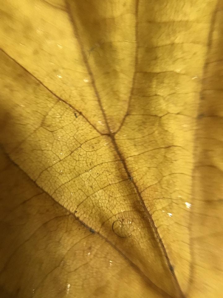 Blips lenti che trasformano smartphone in microscopio
