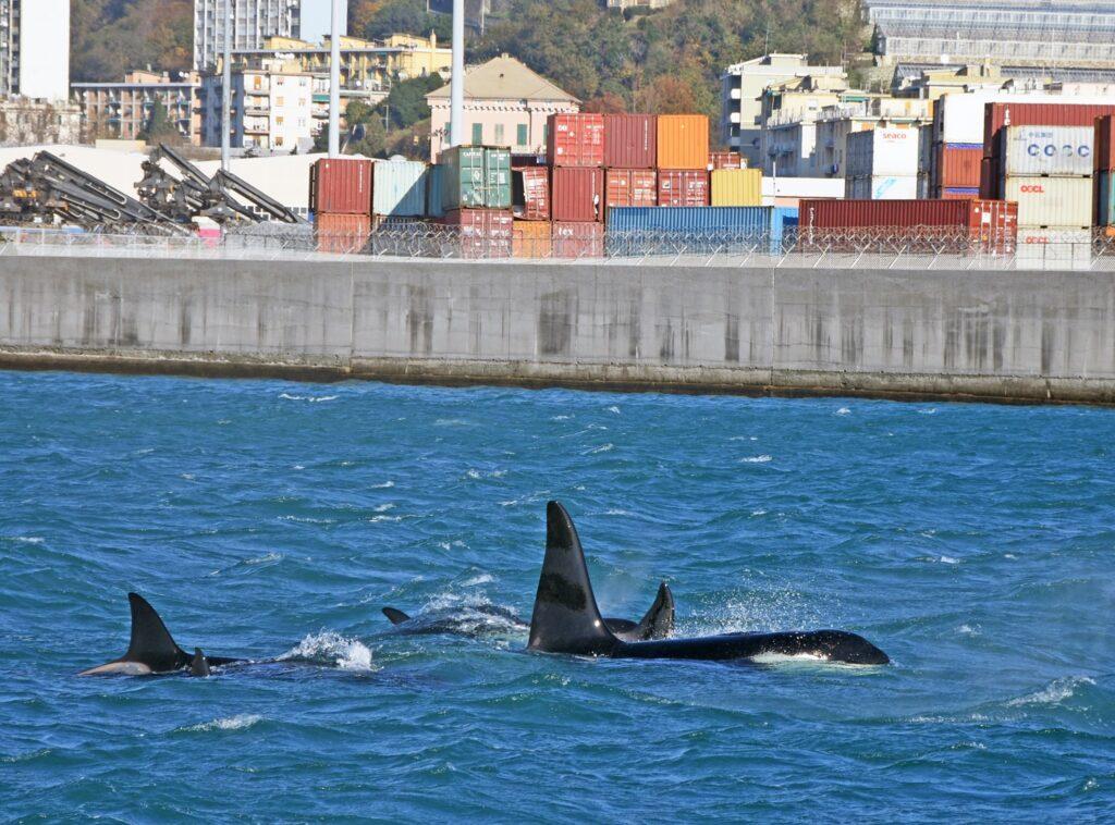 Orche nel porto di Genova