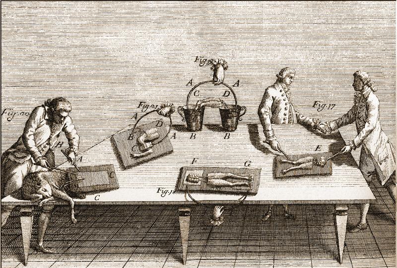 Volta - Galvani, il dibattito che segnò la nascita dell'elettrofisiologia