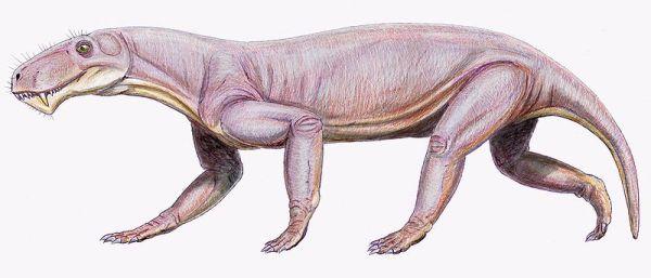 Lycaenops, animali prima dell'acesa dei dinosauri