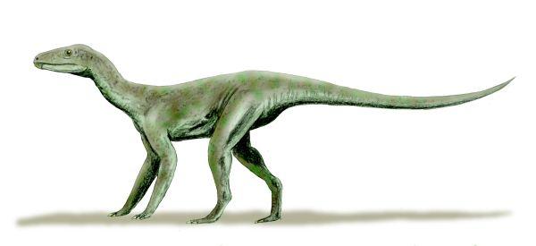 Silesaurus, animali prima dei dinosauri