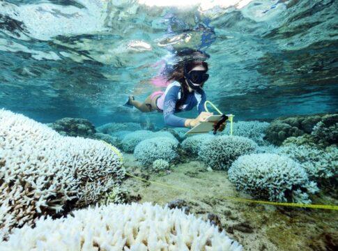 Grande Barriera Corallina oggi