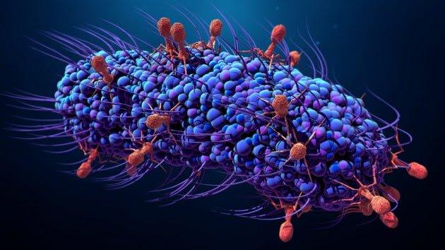 Batteriofagi (rossi) all'attacco di un batterio (blu).  Credits: Focus