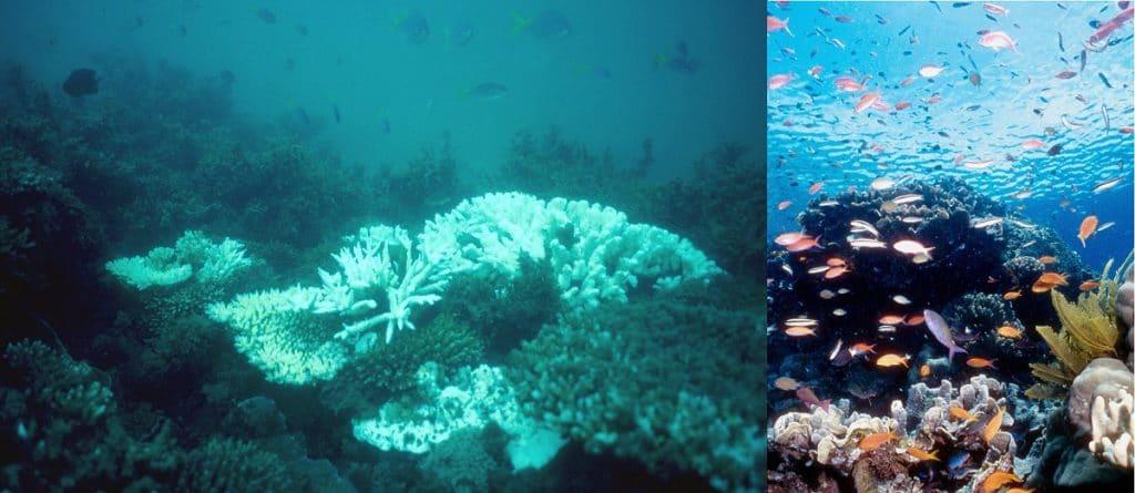 Reef prima e dopo, danni da sbiancamento, coralli morti