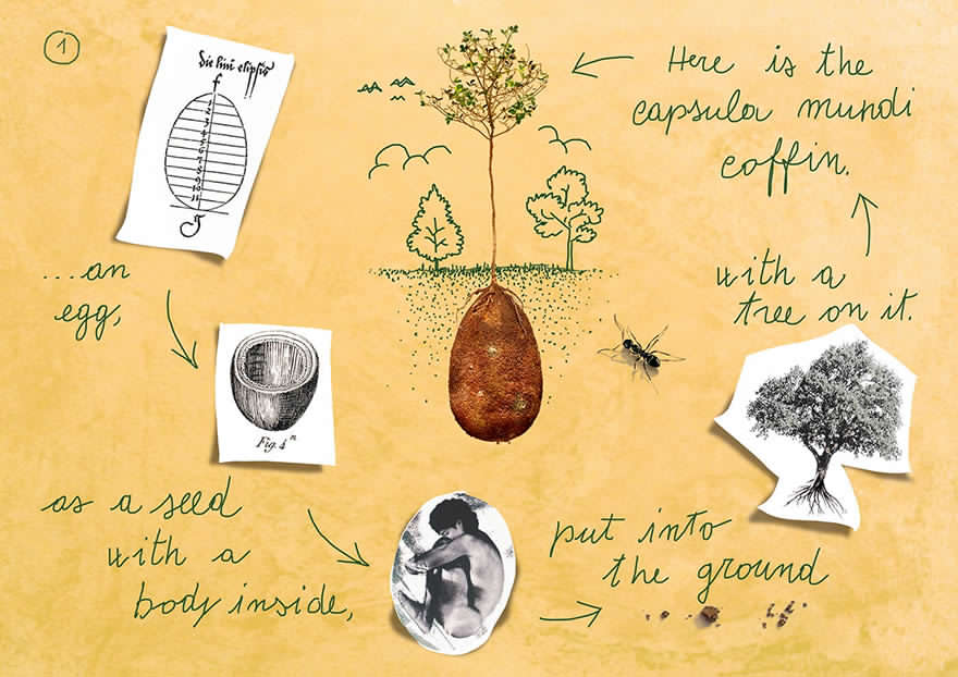 capsula mundi ecologia