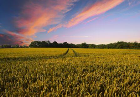 L'agricoltura in un click: soluzioni hi tech per i contadini 4.0