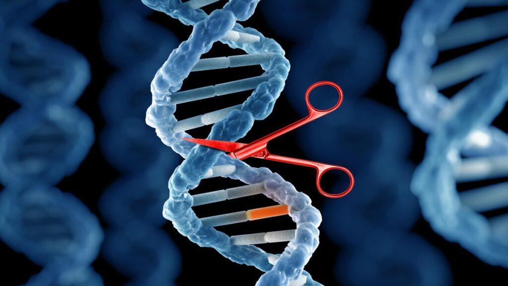 TALEN, le forbici molecolari più efficienti di Crispr-Cas9