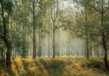 Capsula Mundi: dare alla morte una nuova vita con i cimiteri ecologici