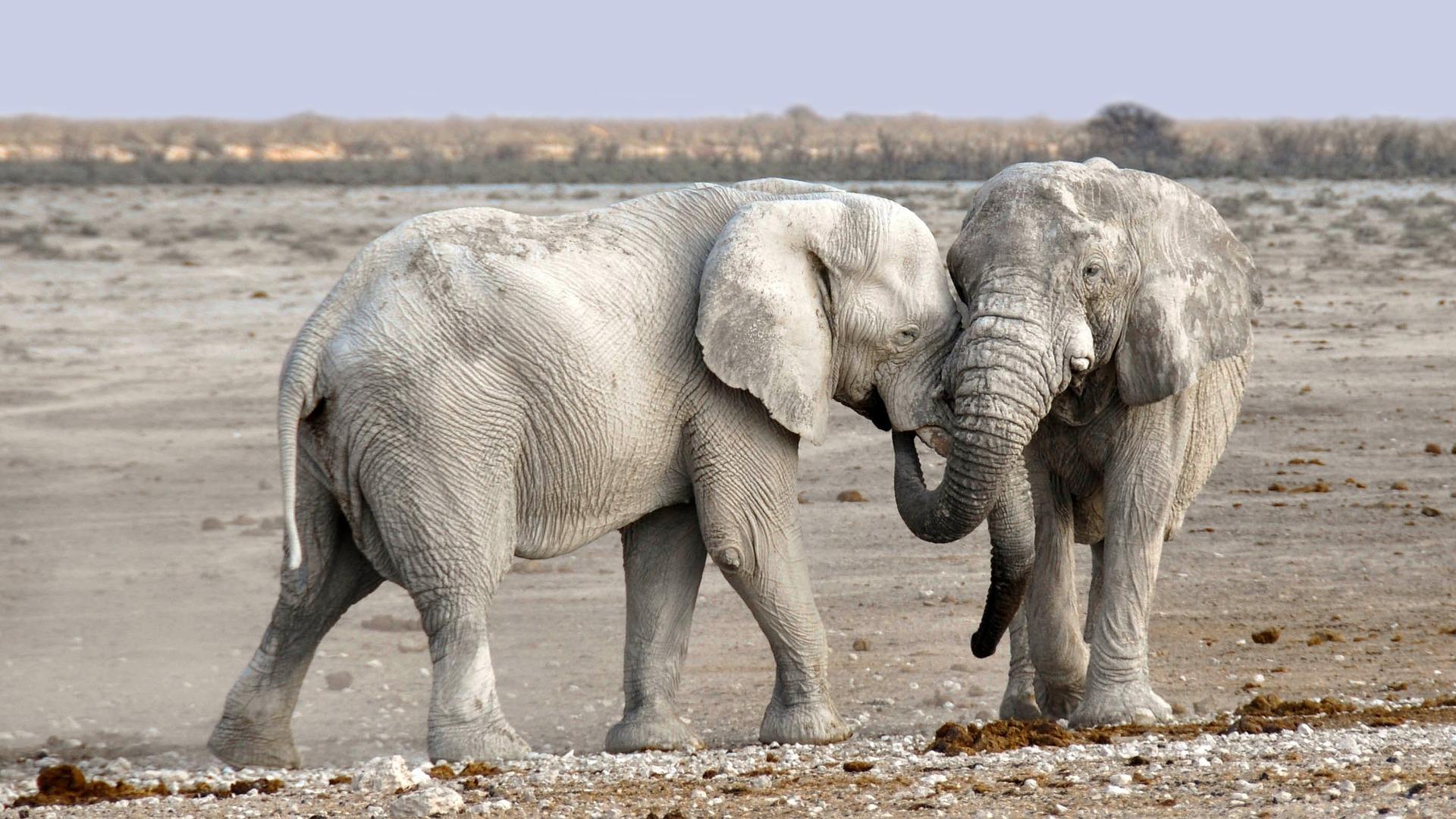 Dal DNA degli elefanti una scoperta per sconfiggere il cancro