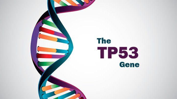 gene tp53