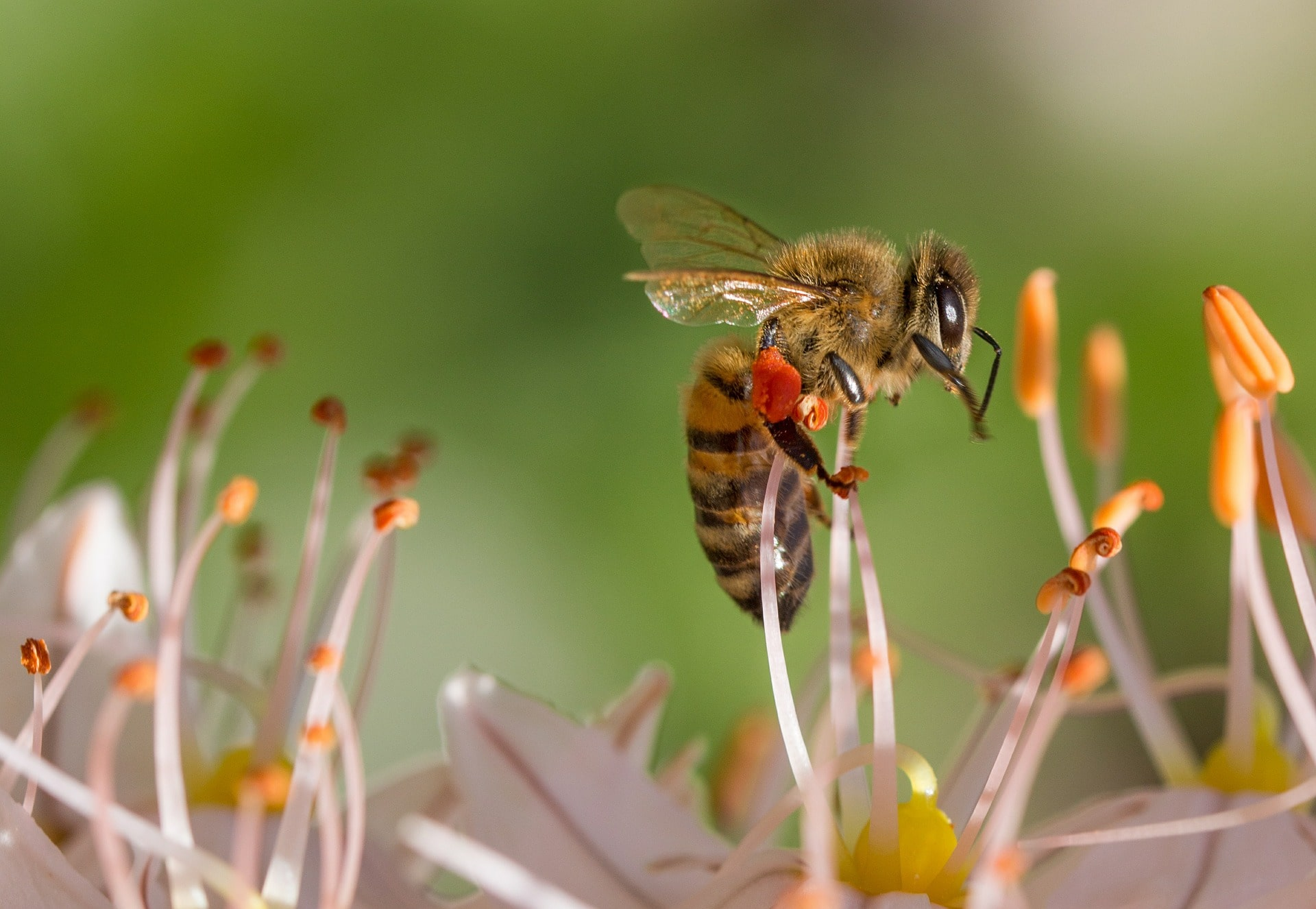 Le api possono aiutarci con il tracciamento dei positivi al coronavirus?