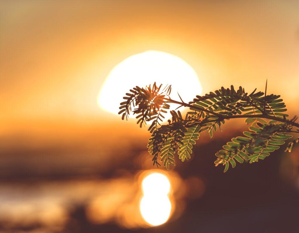 Ramo d'albero davanti ad un tramonto arancio