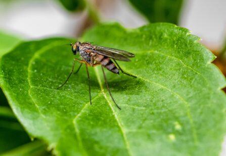 L'estate si avvicina: come prepararsi all'arrivo delle zanzare?