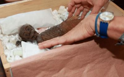 La sirena di Milano: il mostro marino con capelli umani