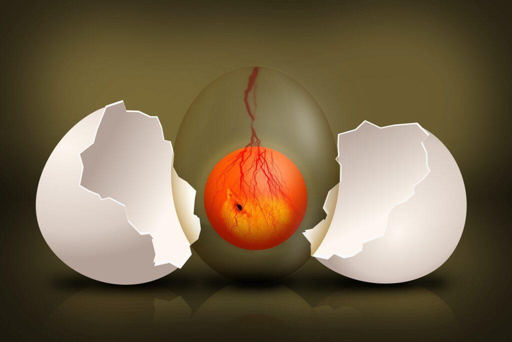 la forma dell'uovo e la sopravvivenza delle specie
