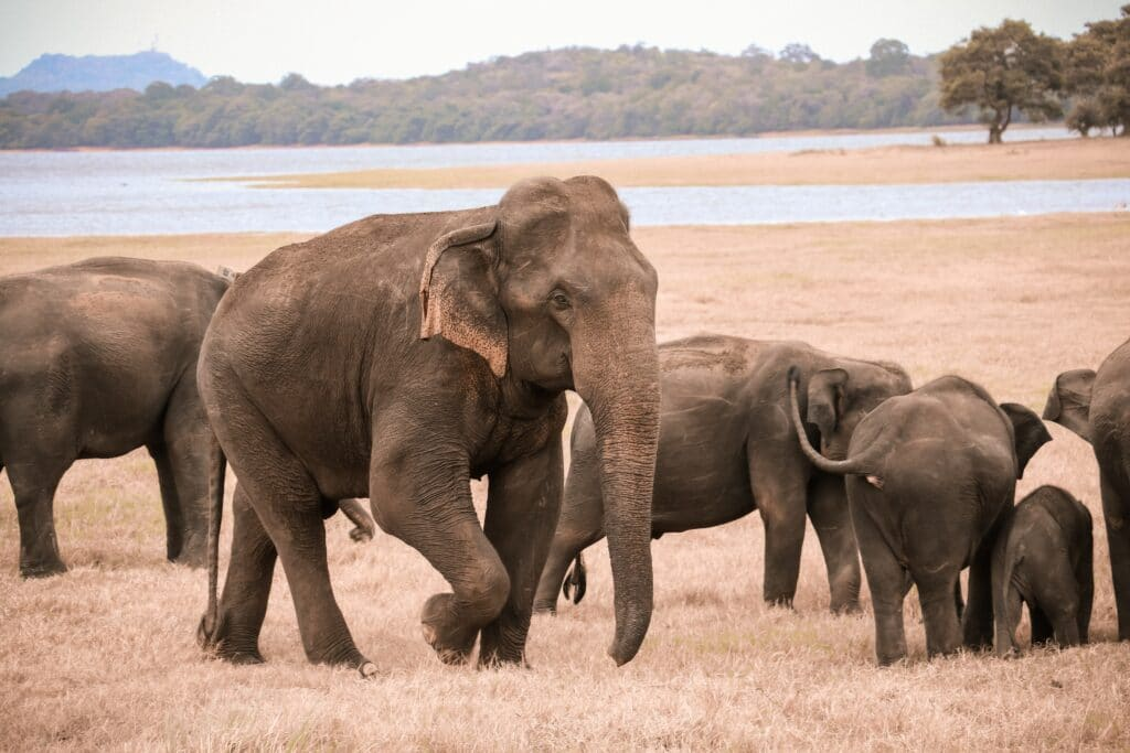 Perché una società sta cercando di riportare in vita il mammut lanoso?